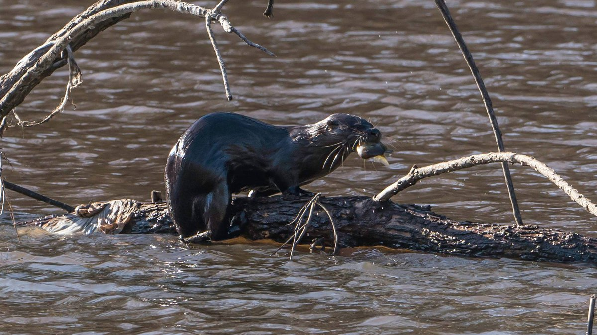 A river otter was seen in Richmond's Forest Hill Park on Sunday.