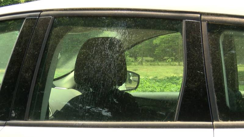 """Turns out, the sticky substance on our cars - known as """"honeydew"""" - is basically bug poop."""