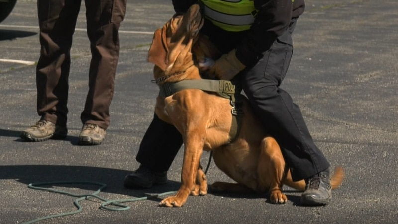 Louisa County hosts its annual Bloodhound Seminar to train its K-9s.