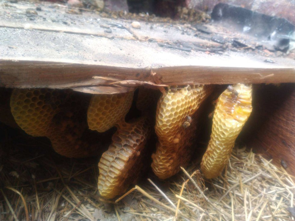 Roofers working at Bellevue Elementary School in Church Hill uncovered a decades-old beehive...