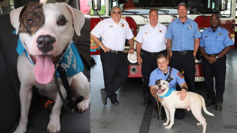 Richmond Fire Department foster dog, Adien!