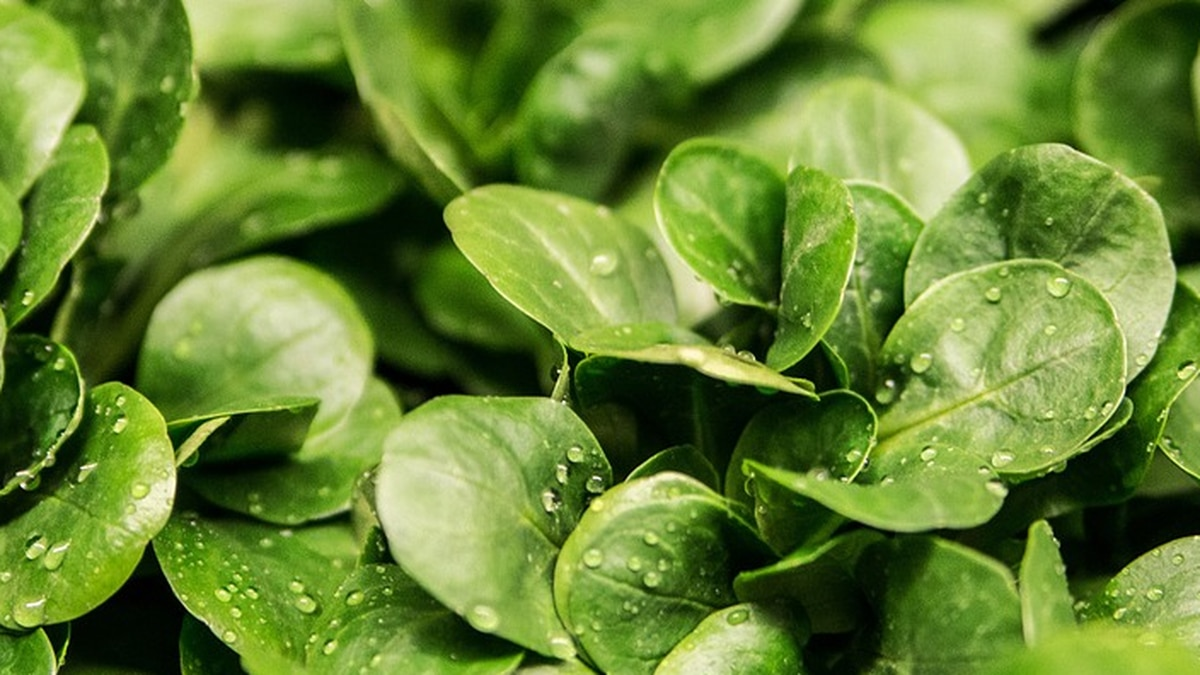 The foods available for delivery include nutrient-rich greens, vegetables, fruit, nuts, milk...