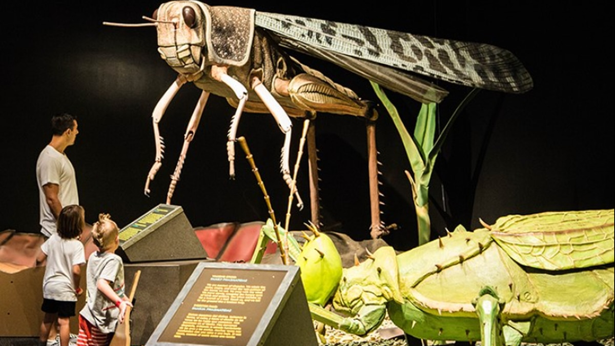 """The Science Museum extended the """"Giant Insects"""" exhibit until January 2021."""