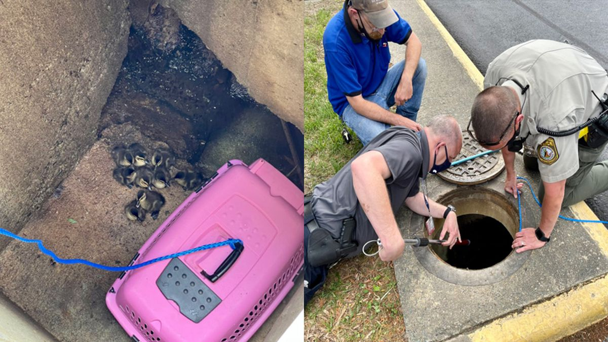 Henrico police officers helped rescue ducklings from a sewer drain.