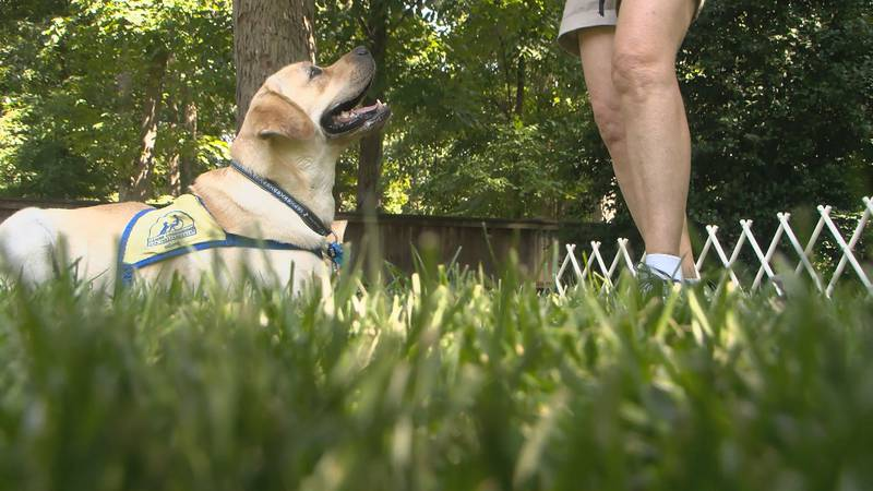 A service dog can make a difference in someone's life, and a Richmond organization is training...