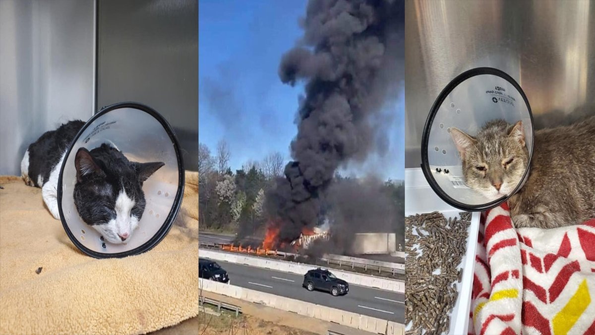 Two cats are recovering after Good Samaritans and first responders helped a driver rescue his...