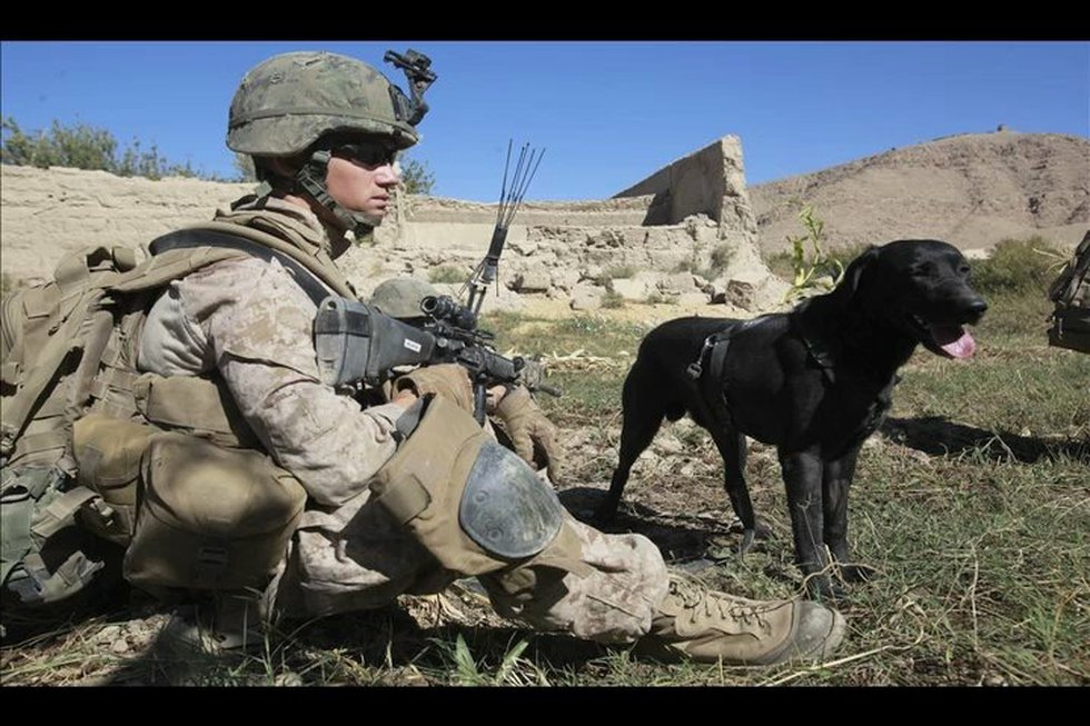Rocky served alongside Matt O'Hara in Afghanistan and the Marine veteran wants the dog to...