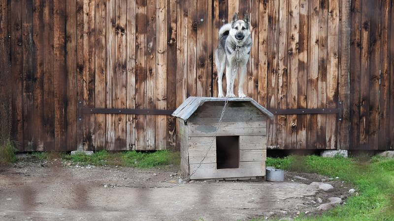 Dog tethering has been a controversial practice for years.