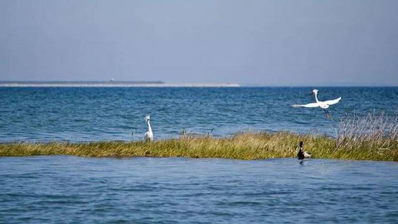 Bird and marsh grass along the Chesapeake Bay. (Source: Virginia Office of Natural Resources.)