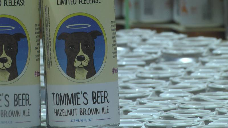 Tommie's Beer is a hazelnut brown ale with caramel notes, to match the coat of the dog it is...