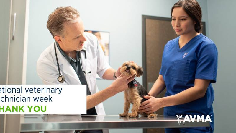 Credentialed veterinary technicians receive advanced education and credentialing that ensure...