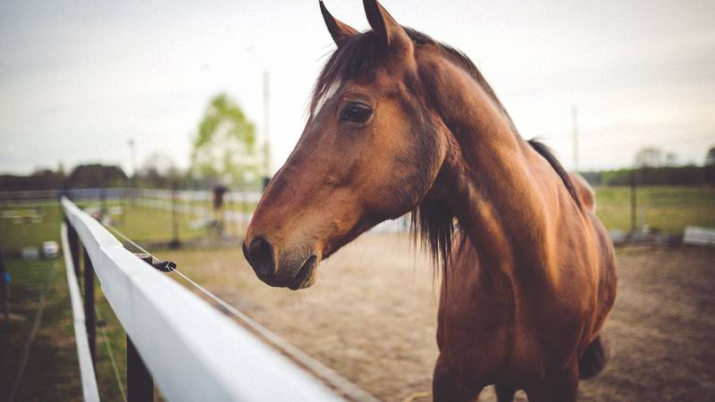 Horse standing next to fence.
