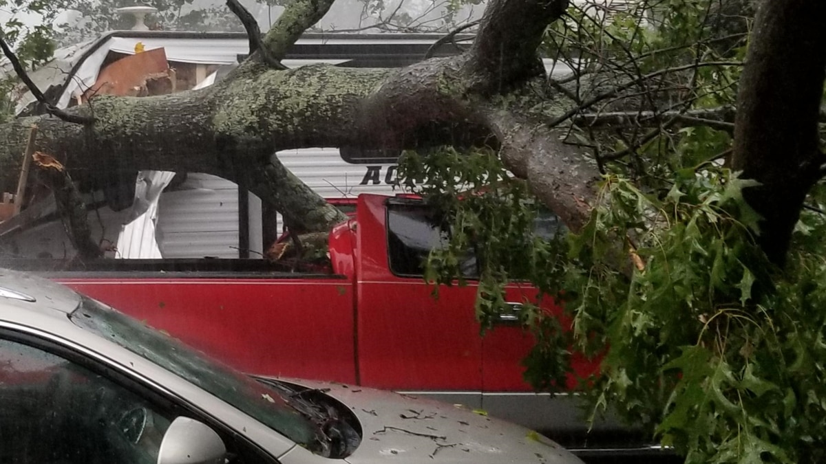 A downed tree struck a car in Keysville. (Source: James Patterson)
