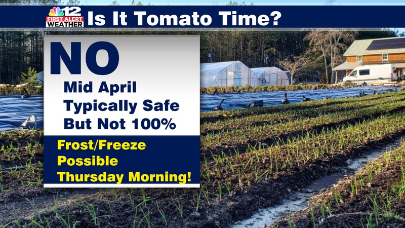 Although mid-April is typically safe to plant your tomatoes, a cold blast Wednesday night could...