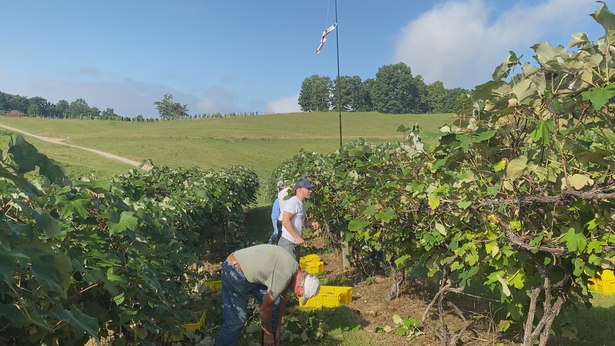 Over the next five years, Southern Virginia Vegetable Packing expects to make more than $60...
