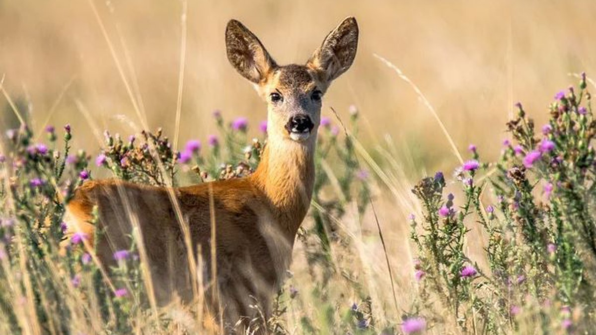 The Virginia Department of Game and Inland Fisheries (DGIF) has confirmed Chronic Wasting...