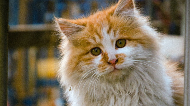 The Karen and Hoyt Little Community Cat Complex will allow the group to have a spay-neuter...