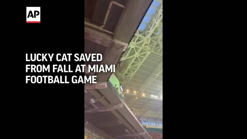 Football fans used an American flag as a makeshift net to safely catch the terrified cat as it...