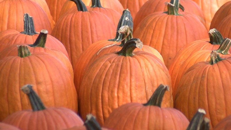 The top 10 pumpkins will go display at the children's hospital. The top 5 pumpkins will win...
