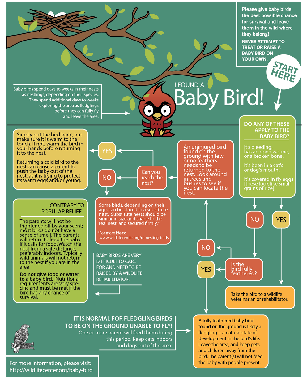 Here's what you should do if you find a baby bird.