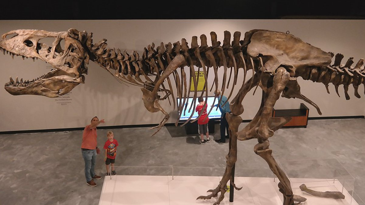 Discovered in 1991, Scotty is the heaviest and oldest T. rex currently on record at almost...