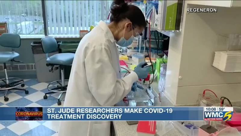 St. Jude scientists make breakthrough and discover possible COVID-19 treatment